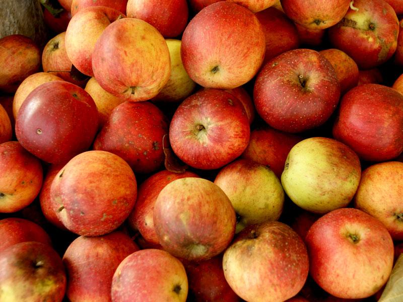 Apfelsaft selbst machen