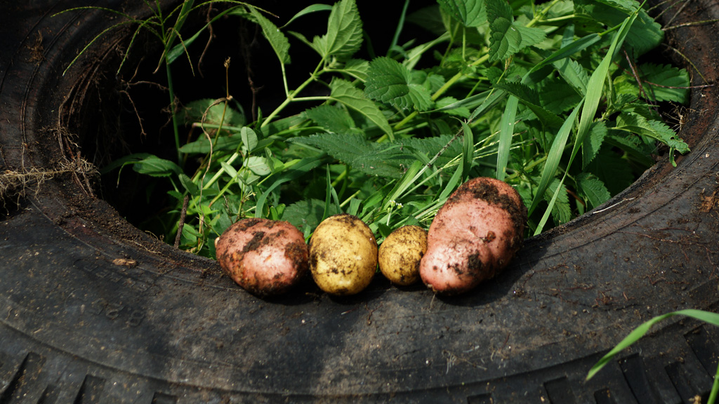 Kartoffel aus dem Autoreifen