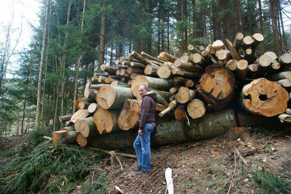 Holz kurz vor dem Abtransport