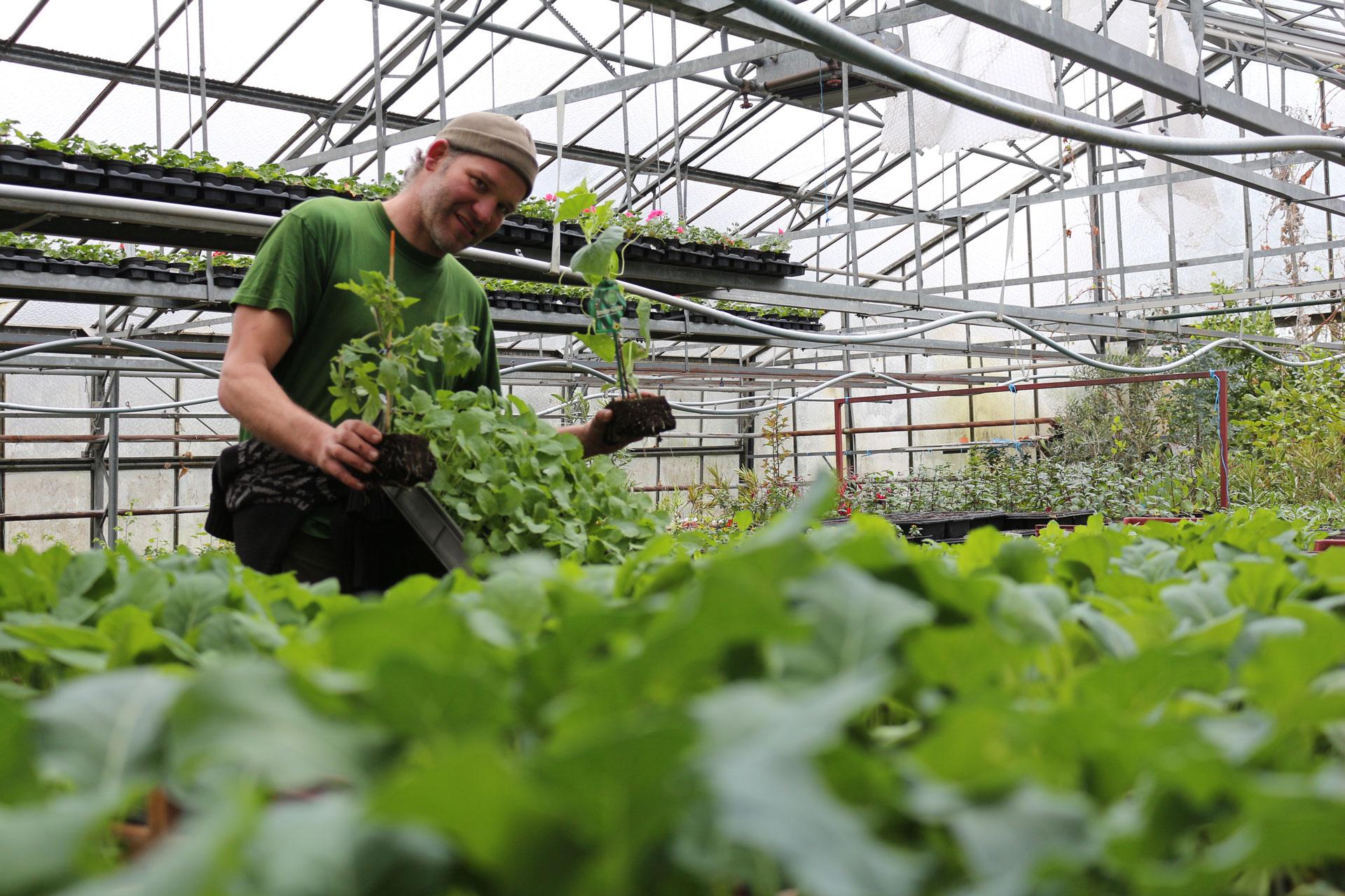 Gartenarbeit März für Garten, Gemüse, Blumen