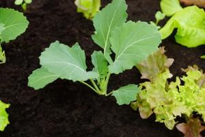 Junges Gemüse, März
