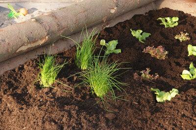 Hochbeet Anlegen Und Bepflanzen Videoanleitung Garteln