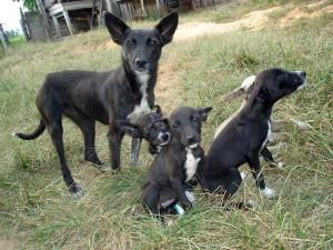 Hundstage 2011, Hundstage 2012