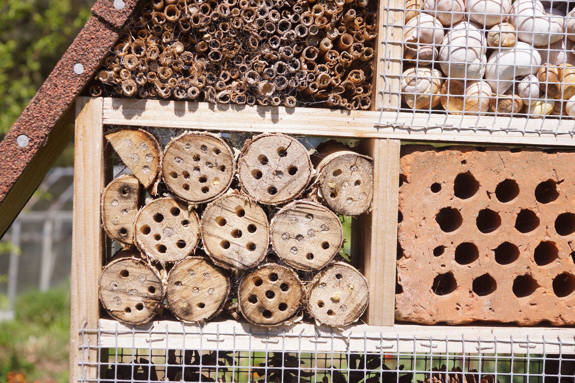 Tipps fürs Insektenhotel