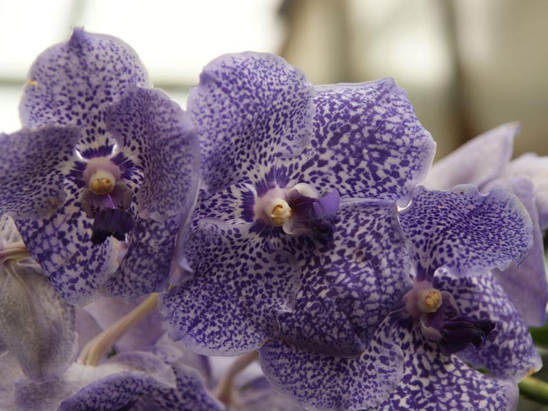 orchideen pflege tipps zum gie en umtopfen und schneiden. Black Bedroom Furniture Sets. Home Design Ideas