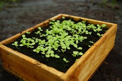 Gartentips  Gartentipps April für Gemüse, Blumen und Rasen | Garteln