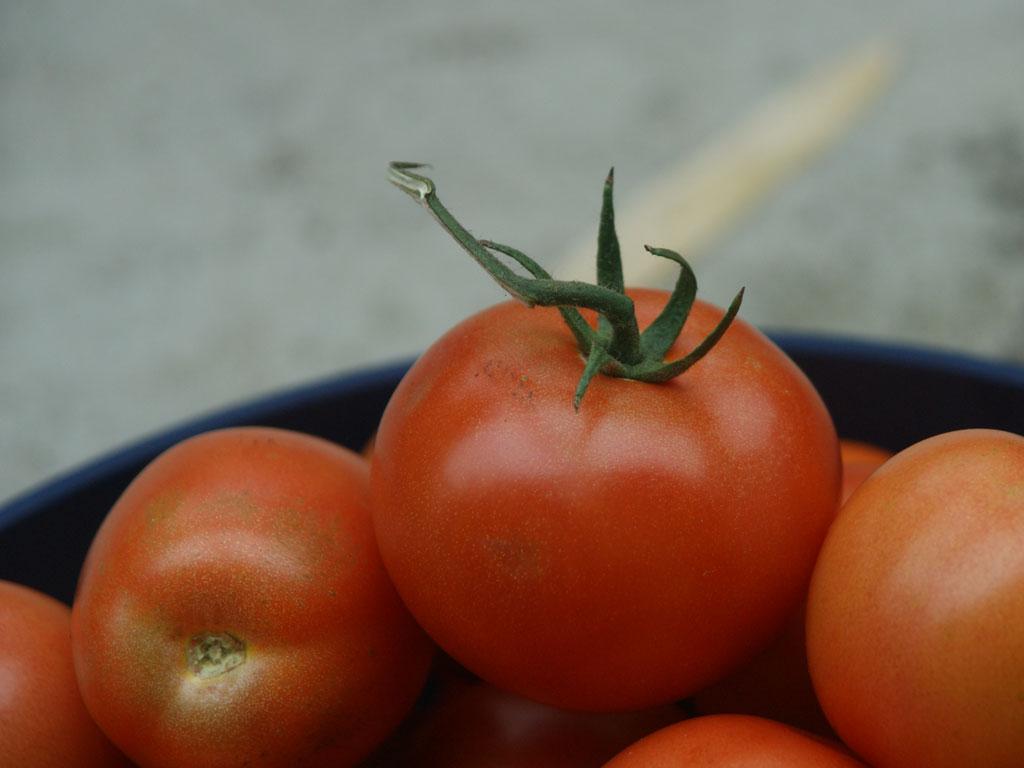 Tomaten - von der Saatgutgewinnung bis zur Ernte